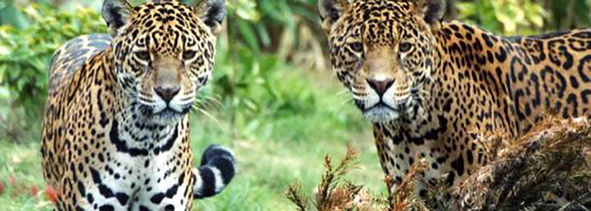 Chester Zoo - have a family holiday in Cheshire with a trip to the zoo